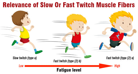 RELEVANCE OF SLOW OR FAST TWITCH MUSCLE FIBERS