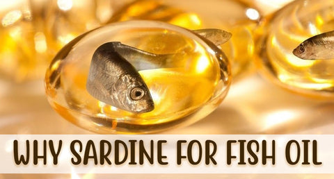 WHY SARDINE FOR FISH OIL