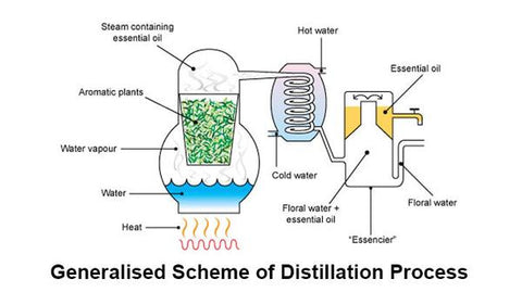 Distillation schematic of essential oils