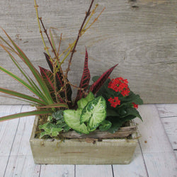 Burlington Florist - Burlington Flowers - Send Flowers - Spiced Cider Planter
