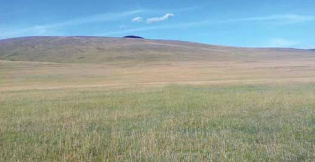 Degraded pasture area