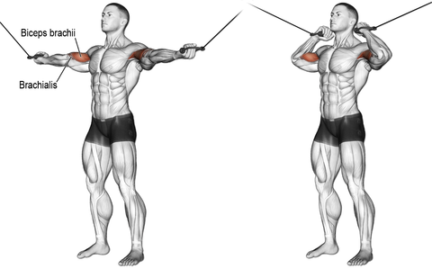 TWO-ARM OVERHEAD CABLE CURL