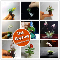 Mini Orchid Seeds phalaenopsis - For Miniature Gardens 100pcs/bag - Awesome Sauce Gifts
