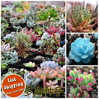 40/bag Mix Succulent seeds lotus Lithops Pseudotruncatella Bonsai plants Seeds for home & garden Flower pots planters - Awesome Sauce Gifts