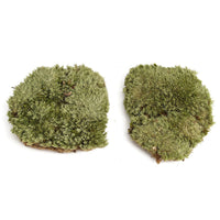 Natural Micro Landscape Ornament Moss Lawn Mossy Stone with Soil Fairy Garden Miniature Decoration Toy DIY Accessories