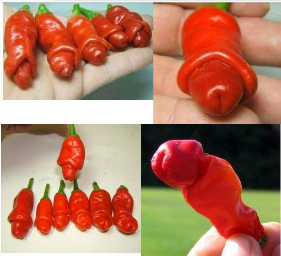 "Pecker shaped Garden plants ""Peter Pepper Seeds"" red hot chili peppers 100 seeds/pack - Awesome Sauce Gifts"