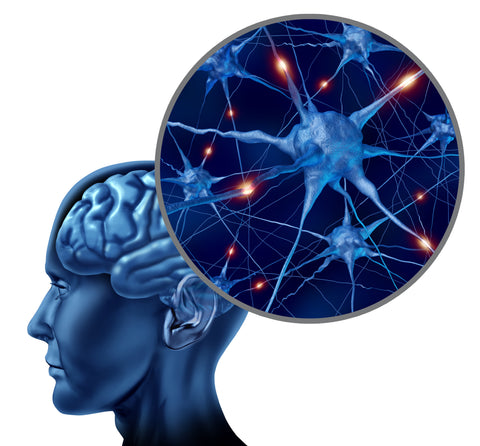 Nootropic Brain