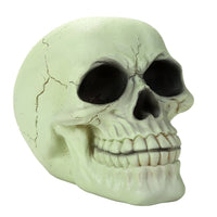 Glow In the Dark Luminescence Skull Halloween Decorative Accessory 3.75 Inch Tall
