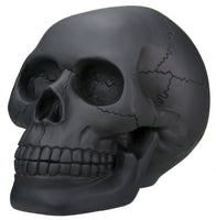 Black Skull Head Collectible Skeleton Decoration Statue