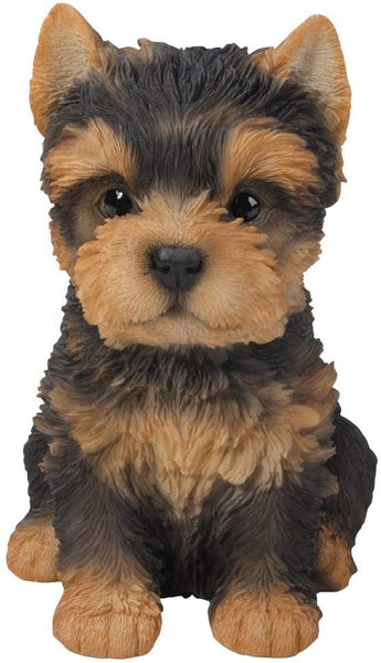 Adorable Seated Yorkshire Terrier Puppy Yorkie