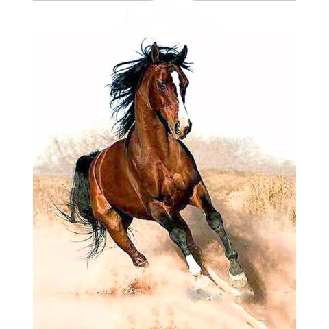 DIY Oil Painting - Running Horse - DIY Art Home Decor