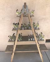 Farmhouse Rustic Ladder Shelf