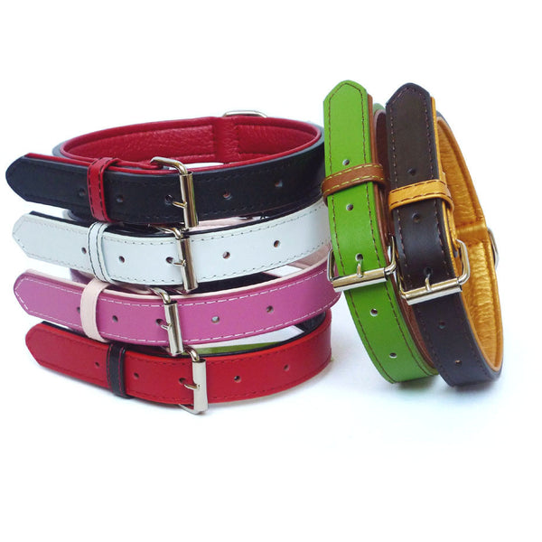 Colour Fusion Collar, Dog collar, The Paws, Need Not Lift A Paw Limited