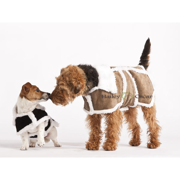 Hailey & Oscar Sherpa Suede Leather Dog Coat, Dog coat, Hailey & Oscar, Need Not Lift A Paw Limited
