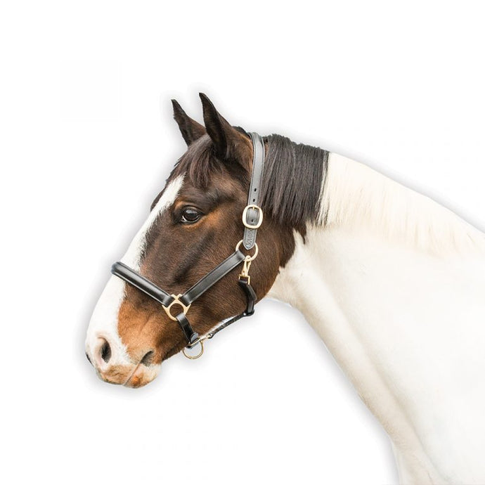 Loveson Leather Headcollar