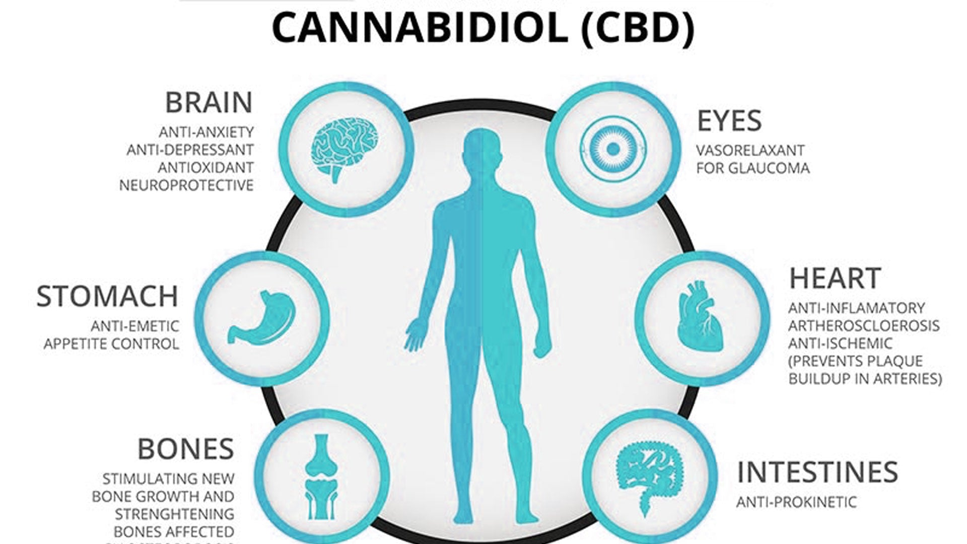 User Guide: How CBD Oil Benefits You