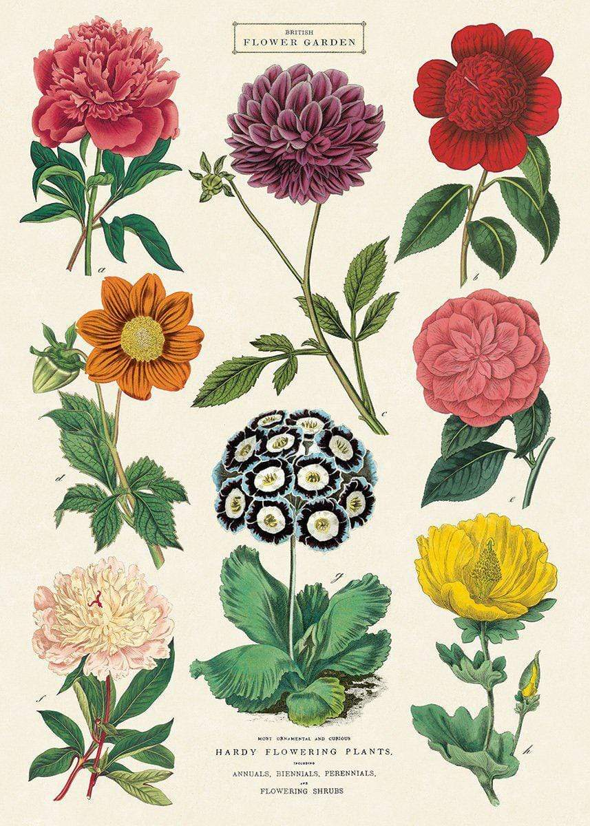 Cavallini & Co British Flower Garden Poster
