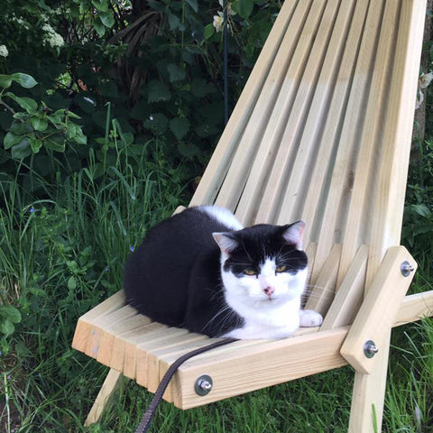 Toby Chair Spruce cat