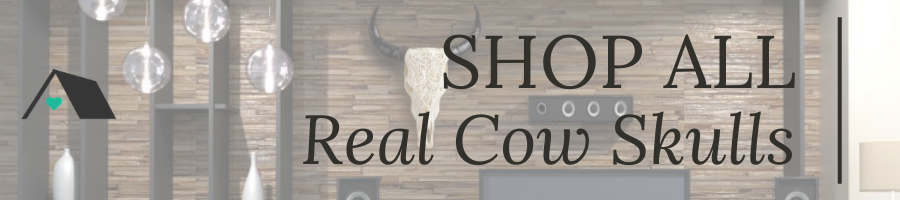 Shop All Real Cow Skulls