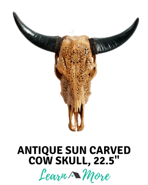 antique sun real carved cow skull