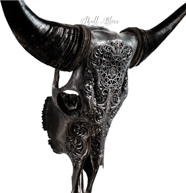 Real Black Sun Carved Cow Skull, 22.5""