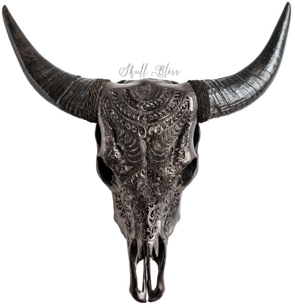 Real Black Boho Carved Cow Skull, 22.5""