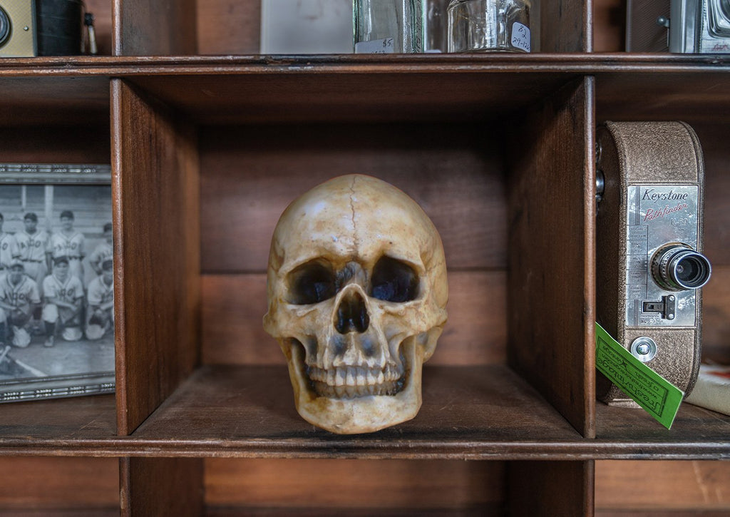 The Darwin | Faux Human Skull | Natural Resin