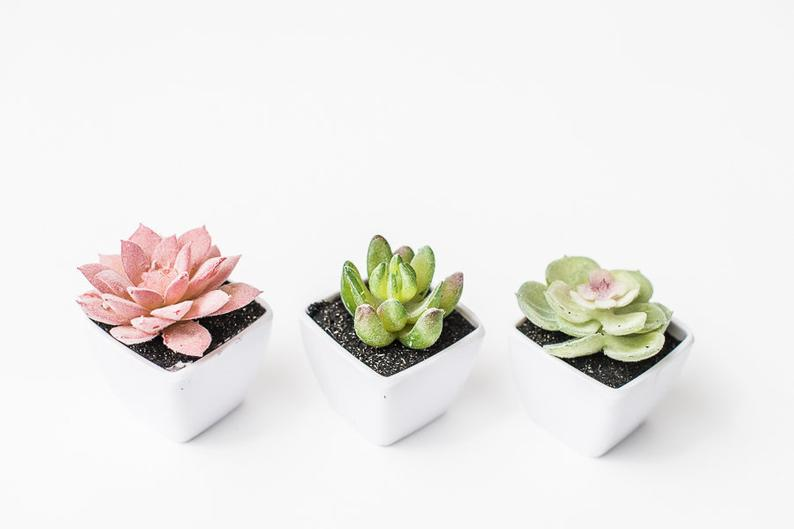 Artificial Mini Succulent Plants in White Pots