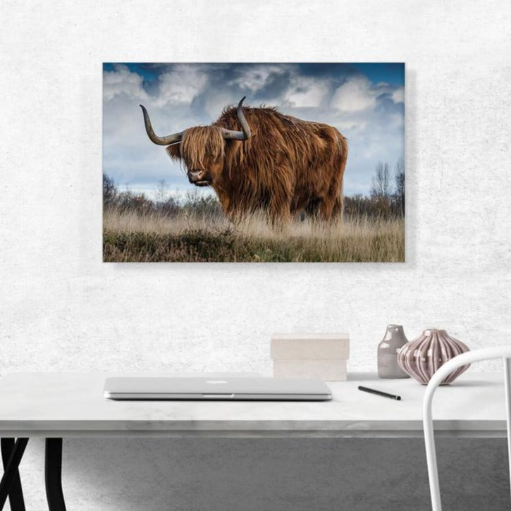 The Long Hair Bull Canvas
