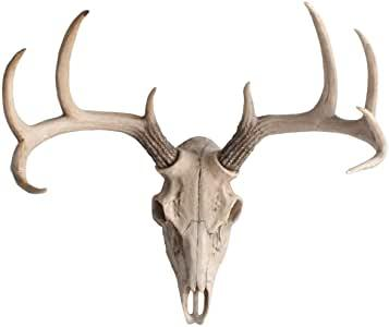 Mini Natural Deer Skull, 14""