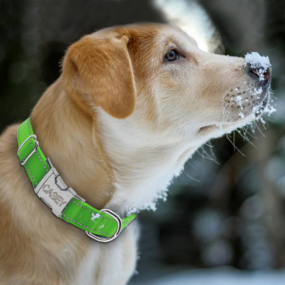 Engraved Nylon Collar - Canine Love Co.