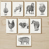 Farm Friends Cards