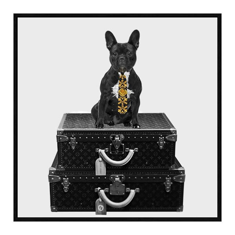 French Bulldog - Trends