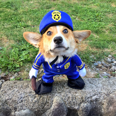 'Pet Flipping': How to Keep Your Corgi Safe from Criminals