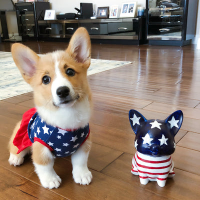 Keep Your Corgi Safe this 4th of July