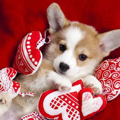 Valentine's Day Top 10 Corgi Gifts for Corgi Lovers