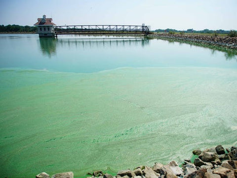https://www.delawareonline.com/story/news/2019/08/15/if-its-green-dont-go-in-what-know-toxic-algae-killing-dogs/2007804001/