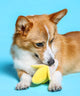 [FOR DOGS] Banana Chew Toy