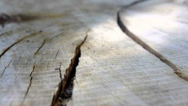Tips & tricks for wood crack prevention