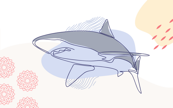 Shark Week at Rasa: How We're Celebrating International Women's Day