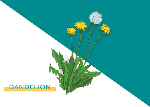 D is for Dandelion, Dandelion is for Detox 🙌