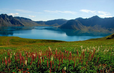 Changbai Mountain, pristine source of our sustainable rhodiola