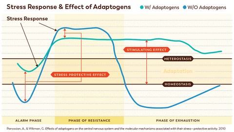 Stress Response & Effect of Adaptogens