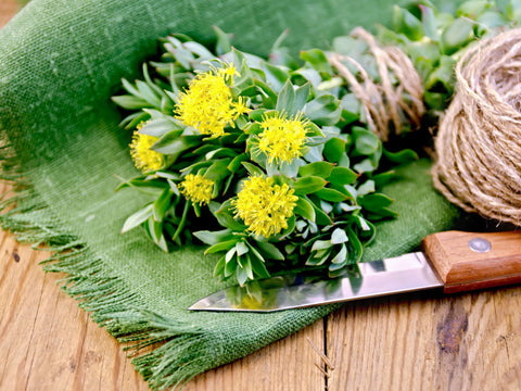 Adaptogenic rhodiola supports fertility and libido