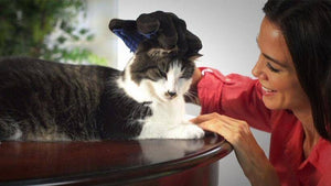Grooming Massage Magic - Wonderful Cats
