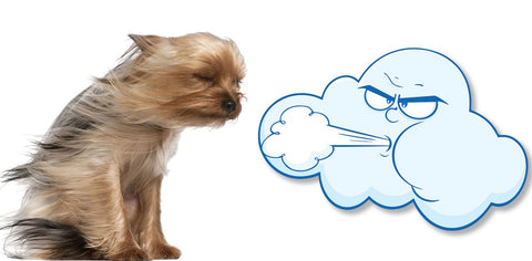 wind cloud and sad dog