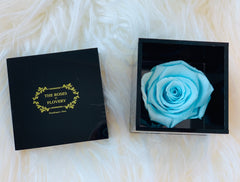 Elegant premium Ecuador preserved Tiffany blue rose in black cube