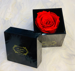 Elegant premium Ecuador preserved red rose in black cube - Flovery