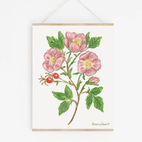 Wild Rose - Botanical Art Print on paper 9x12
