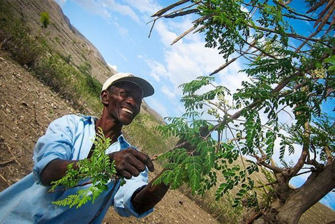 Happy man planting tree